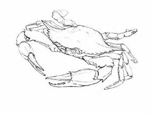 Blue Crab Drawing