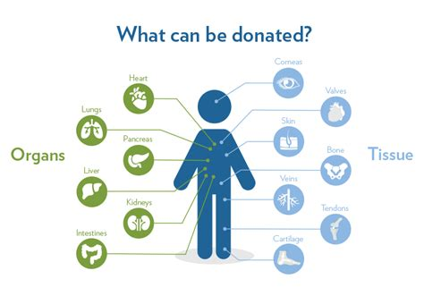 organ tissue donation facts organs donated donor transplanted