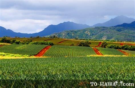 Agriculture of Hawaii   Macadamia Nuts, Pineapple and Hawaii Coffee