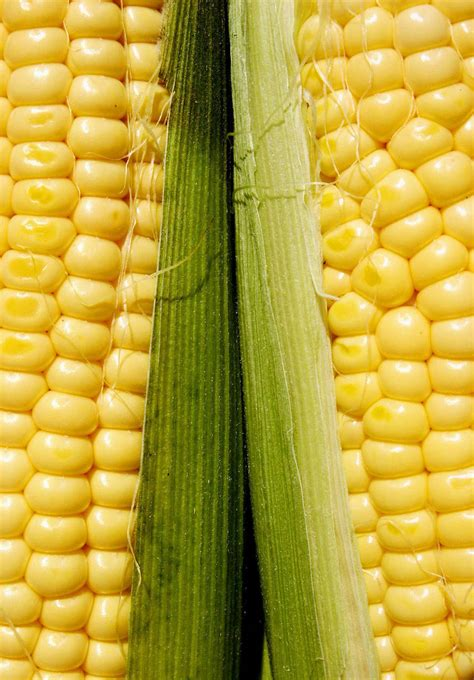 boil corn in husk how to cook corn in the husk microwave grill bake boil melanie cooks