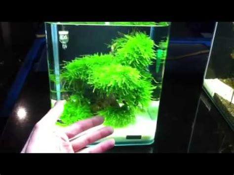 10 liter nano cube bei zoo co schneider in arnstadt