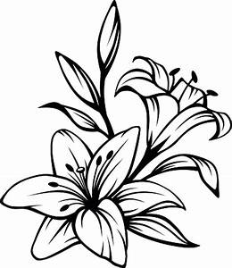 Flower Drawing Lily - ClipArt Best