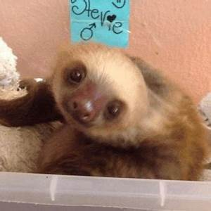 Gangster Sloth Gif | www.pixshark.com - Images Galleries ...