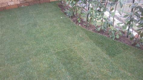 costo tappeto erboso al mq il tappeto erboso a rotoli quanto costa viziato it
