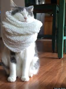 cat scarf cat wearing a scarf will make the post