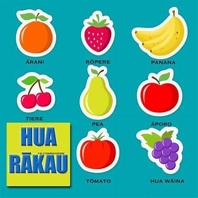 Maori Names Clipart Fruit Language Resources Words