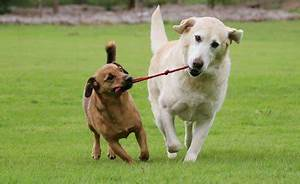 kennels and cattery boarding in exeter With reliable dog sitters
