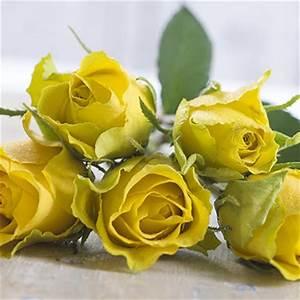 Gelbe Rose Bedeutung : blumen zum valentinstag verschicken mit valentins ~ Whattoseeinmadrid.com Haus und Dekorationen