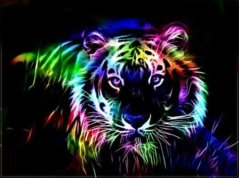 Rainbow Animal Wallpaper - colorful fractal tiger cats wallpaper id 1199520