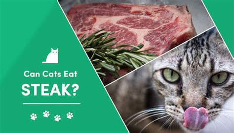can cats eat raw steak