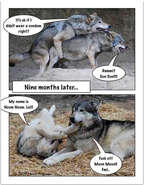 Funny Wolf Memes - moon moon the wolf meme moon moon pinterest legends wolves and olivia d abo