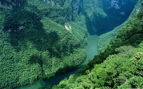 Green Scenery Wallpapers  Background Wallpapers
