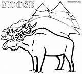 Moose Coloring Pages Winter Forest Animal Colorings sketch template