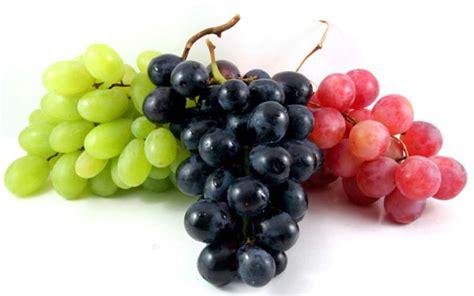 Grape Bonsai for Earthy Feeling – BeaBeeInc