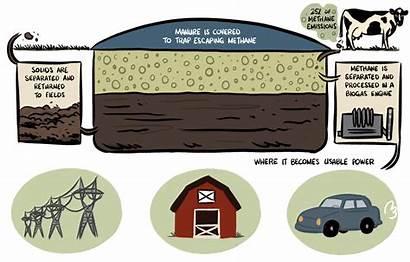 Methane Dairy Digester California Impact Manure Farm