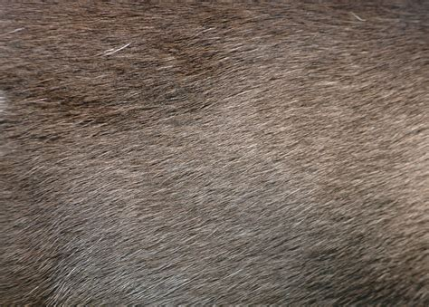 wild boar texture iconshow