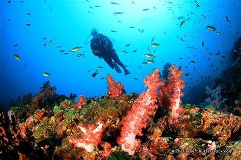 Best Dive Shop by 10 Best Scuba Dive Centers In Bali Where To Learn Scuba