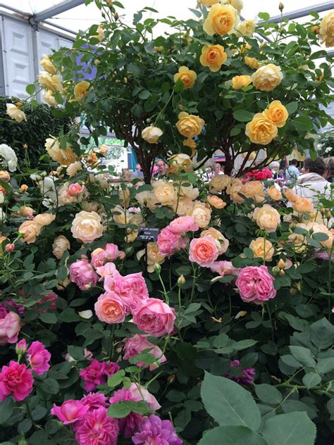 david garden roses flower focus flirty fleurs the florist blog inspiration for floral designers