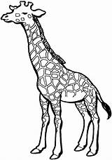 Giraffe Coloring Pages Animals Pattern Wildlife Printable Baby sketch template