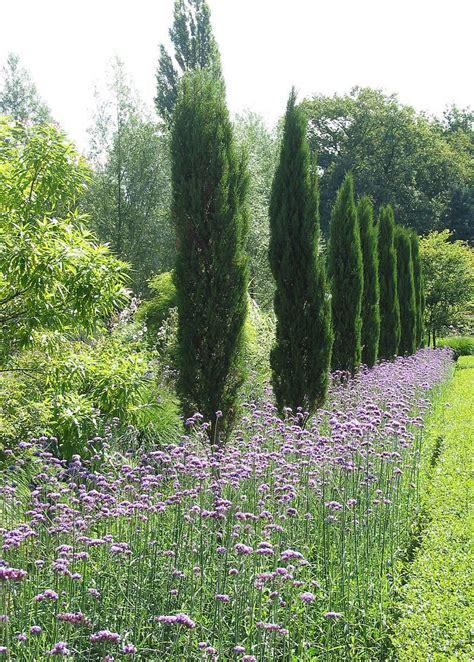 Garten Pflanzen Bäume by Zypressen Lavendel Pflanzen Mediterraner Garten B 228 Ume