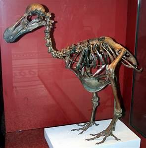 Extinction around the world: Dodo bird and Western Black ...