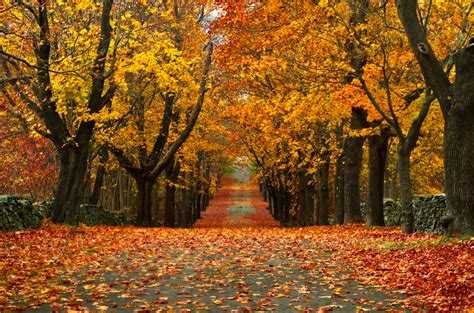 beautiful fall colors beautiful fall leaf www pixshark com images galleries with a bite