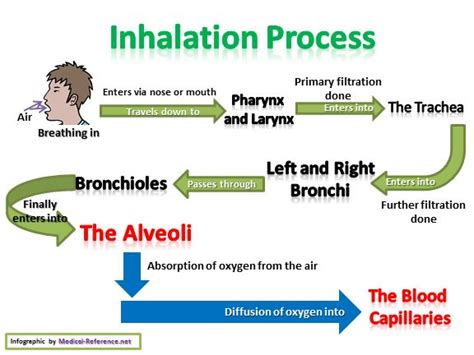how does the respiratory system work flow chart and