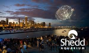 shedd aquarium in chicago illinois groupon