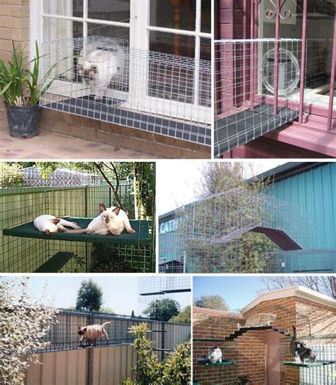 catio ideas barks and blooms the best of two worlds the catio