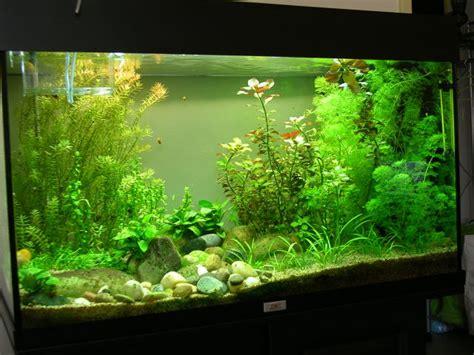 aquarium achat en ligne 28 images d 233 coration aquarium 20l aquariophilie et vente en