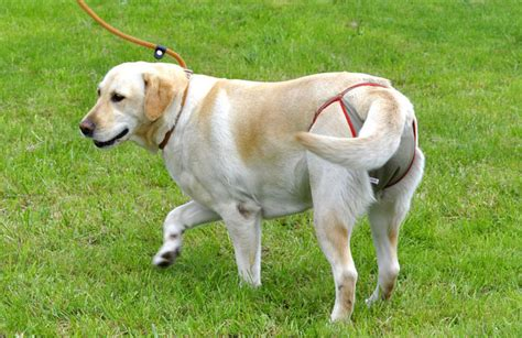 piccobello hundewindeln warum windeln fuer hunde