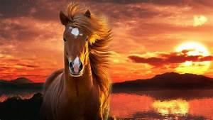 Schöne Bilder Facebook : sch ne pferde hintergrundbilder google suche sch ne bilder und spr che pinterest suche ~ Orissabook.com Haus und Dekorationen