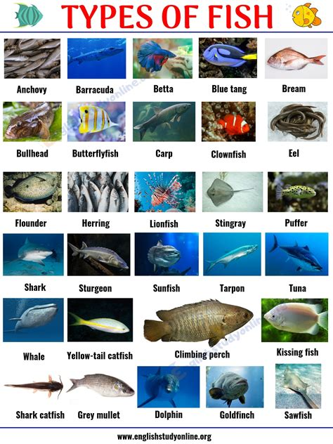 types  fish list   popular fish names  pictures