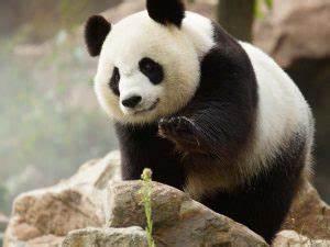 Billet Zoo De Beauval Leclerc : parrainer un animal au zoo pourquoi o et combien a coute ~ Medecine-chirurgie-esthetiques.com Avis de Voitures