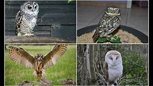 What owl species are best for beginners + Lookie climbs me ...