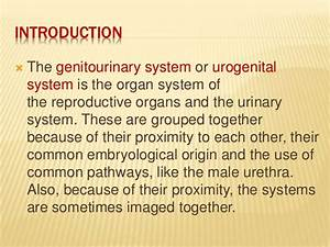 Diseases Of The Genitourinary System