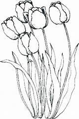 Coloring Tulips Holland Parrot Pages Lovely Tulip Flower Peony Flowers Drawings Drawing Line Kidsplaycolor Abstract Printable Embroidery Outline Parrots Getcolorings sketch template