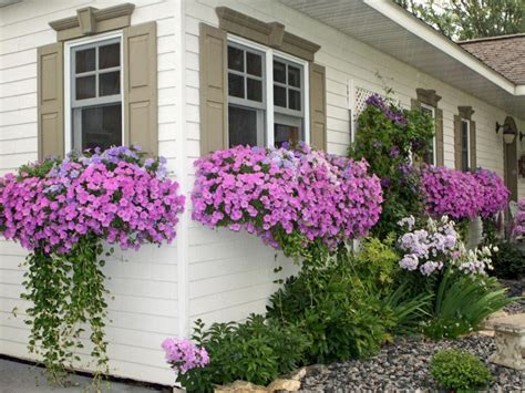 simple  beautiful front yard landscaping ideas  landscaping window box flowers front
