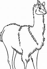 Llama Coloring Pages Drawing Outline Clip Clipart Cliparts Alpaca Clipartbest Getdrawings Mama Animal Library sketch template