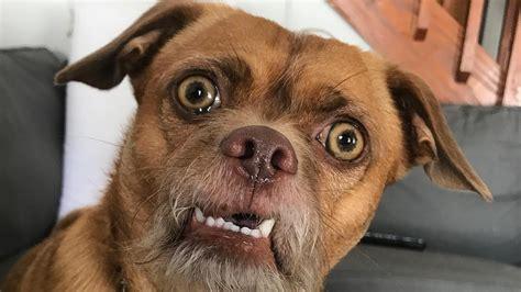 dieser hund ist auf instagram ein star watson