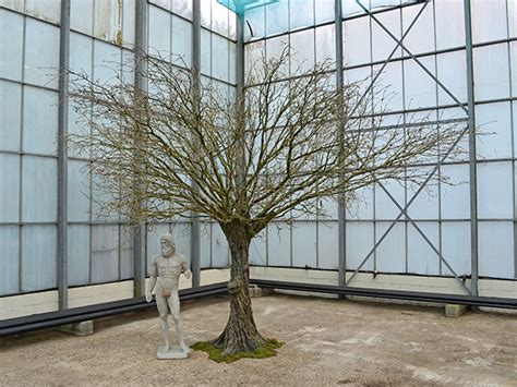 artificial bare trees palmbrokers catalogue artificial trees plants for hire fibreglass trees