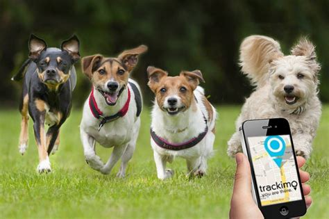 How Gps Animal Tracking Helps Pet Owners