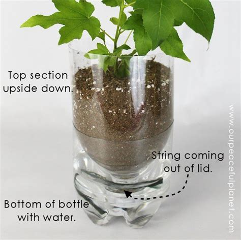 diy  watering planters    craft today
