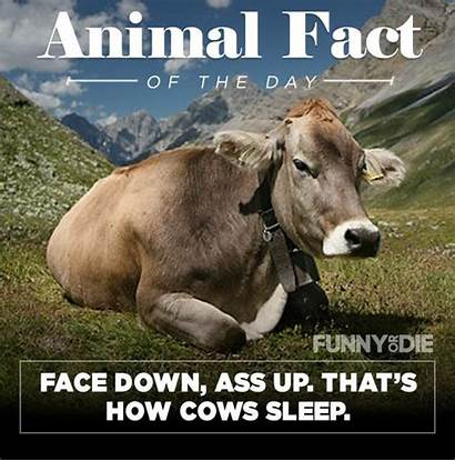 Facts Animal Funny Pee Might