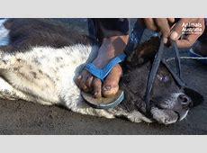Bali dog meat trade investigation 2017