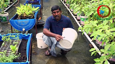 grow   food ii container gardening ideas