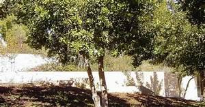 Garden of the Righteous - Oskar & Emilie Schindler Tree ...