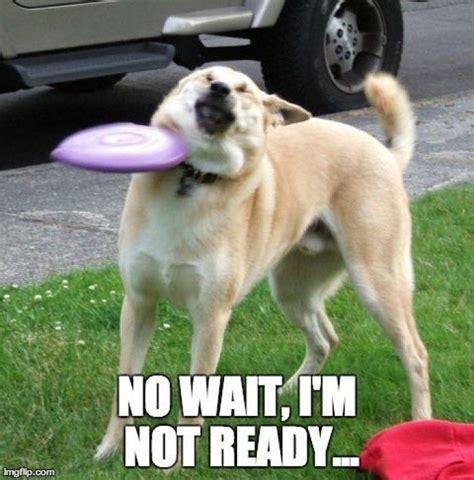 Funny Dog Face Meme - best 25 funny dog memes ideas on pinterest dog memes smiling dog meme and laughing dog meme