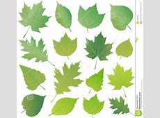20 Leaves Vector Icon Images Green Leaf Vector, Vector