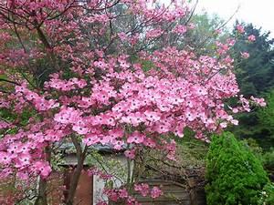 Rote Blätter Baum : ipernity bl ten floroj roter hartriegel by elbertinum ~ Michelbontemps.com Haus und Dekorationen